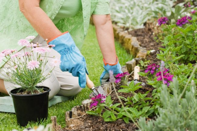 Key Advantages of Using Gypsum as Soil Amendment for Gardening and Farming