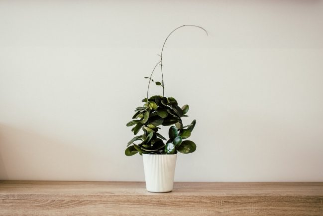 Add a Splash of Life to Your Home with Artificial Plants