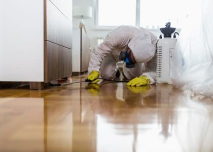 Don't Delay When You Need Pest Control in your Home