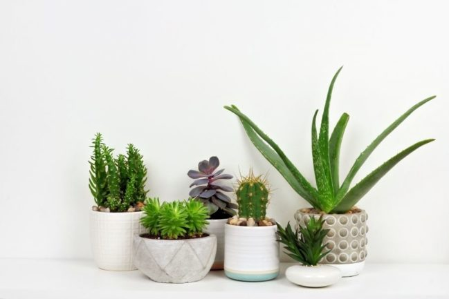 Make Your Home Look Amazing with Succulents