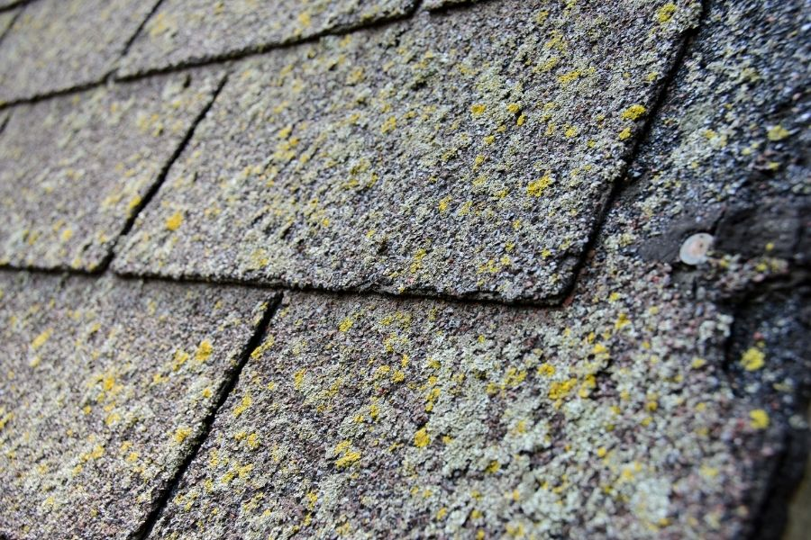 Some May Ask: Can I Shingle Over Moss Covered Shingles