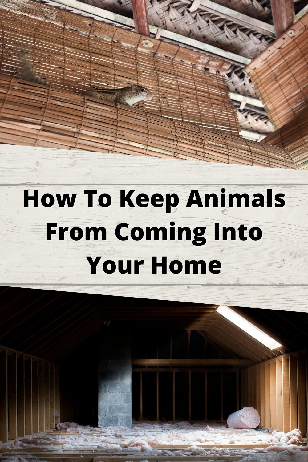 How To Keep Animals and Rodents From Coming Into Your Home